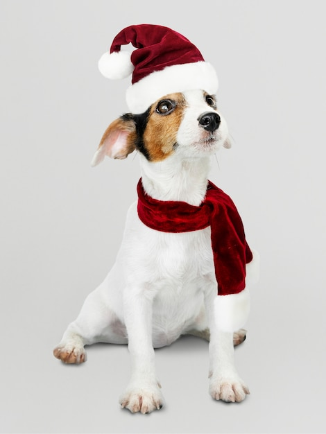 Filhote de cachorro adorável jack russell retriever vestindo um chapéu de natal Psd grátis