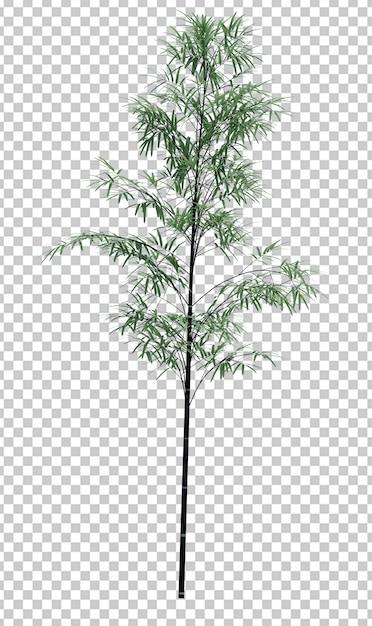 Natureza objeto bambu árvore isolado espaço em branco Psd Premium