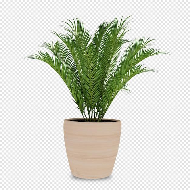 Planta isométrica em renderização 3d isolada Psd Premium