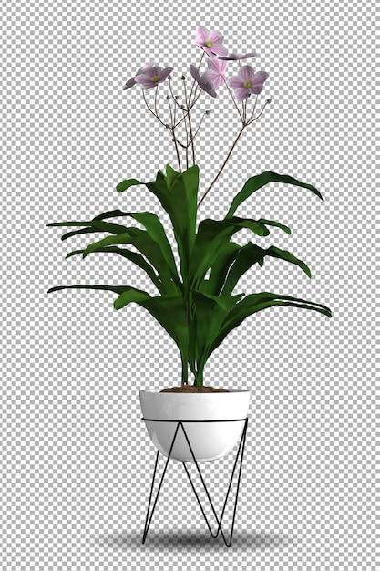 Renda da planta isolada com vista isométrica Psd Premium
