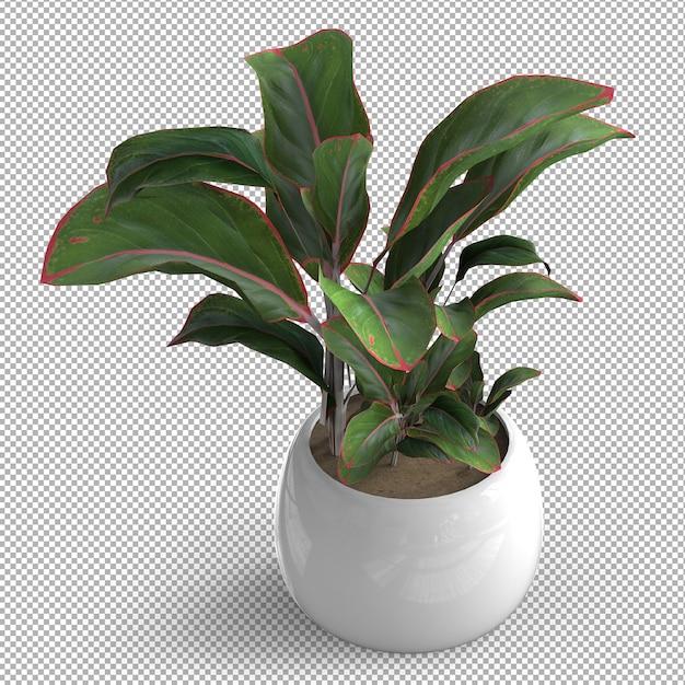 Renda da planta isolada. pote de cerâmica. vista isométrica. plano de fundo transparente. 3d premium. Psd Premium