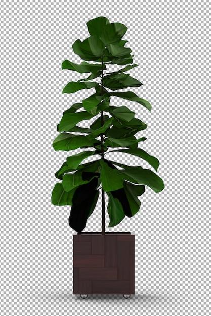 Renda da planta isolada. vaso de planta. vista frontal isométrica. 3d. criador de cena. Psd Premium