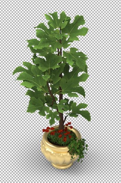 Renda da planta isolada. vasos de plantas. vista frontal isométrica. 3d. criador de cena. Psd Premium