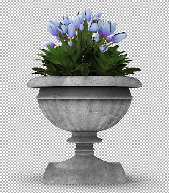 Renda da planta isolada. vista frontal isométrica. parede transparente. 3d premium. Psd Premium