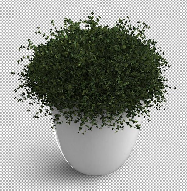 Renda da planta isolada. vista isométrica. . 3d. Psd Premium