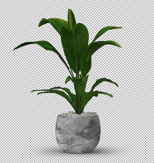 Renda da planta isolada Psd Premium