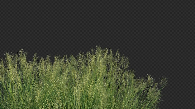 Renderização 3d do primeiro plano da grama de arroz indiano Psd Premium
