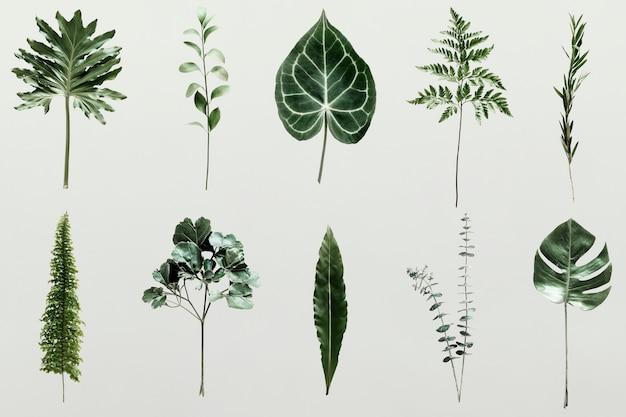 Sombra de folhas de palmeira na parede Psd grátis