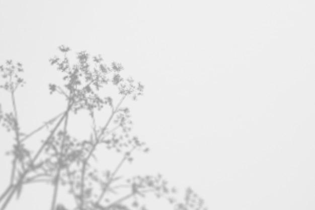 Sombras ervas selvagens e flores em uma parede branca Psd Premium