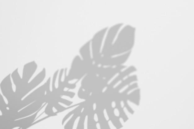 Sombras monstera tropico deixa em uma parede branca Psd Premium