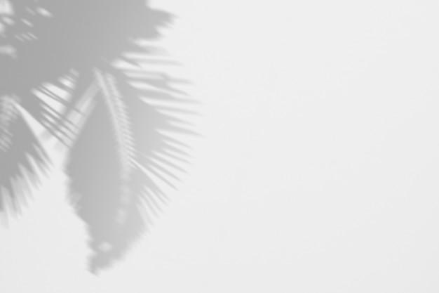 Sombras palmeira trópico folhas em uma parede branca Psd Premium