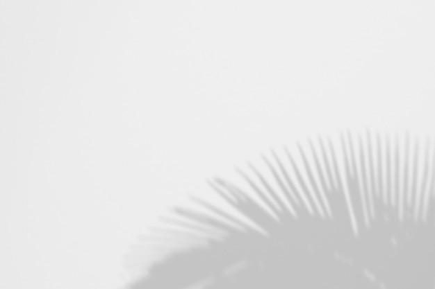 Verão de folhas de palmeira de sombras em uma parede branca Psd Premium