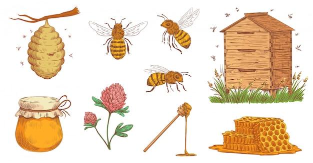 Abeille à Miel Dessiné à La Main. Gravure D'apiculteur, Abeilles En Nid D'abeille Et Ferme D'apiculture Vintage Vector Illustration Set Vecteur Premium