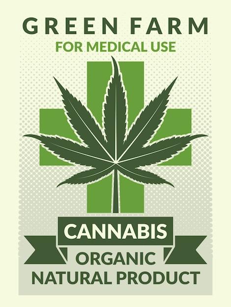 Affiche Médicale Avec Des Illustrations De Feuilles De Marijuana. Bannière De Marijuana Naturelle à Usage Médicinal Vecteur Premium