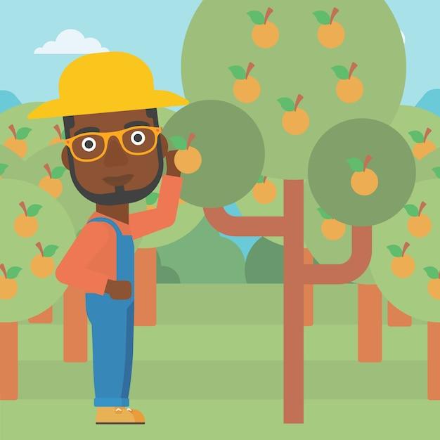 Agriculteur ramassant des oranges Vecteur Premium