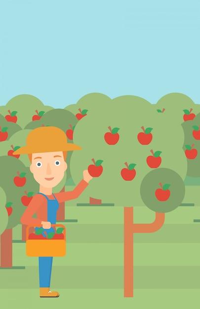 Agriculteur ramassant des pommes Vecteur Premium