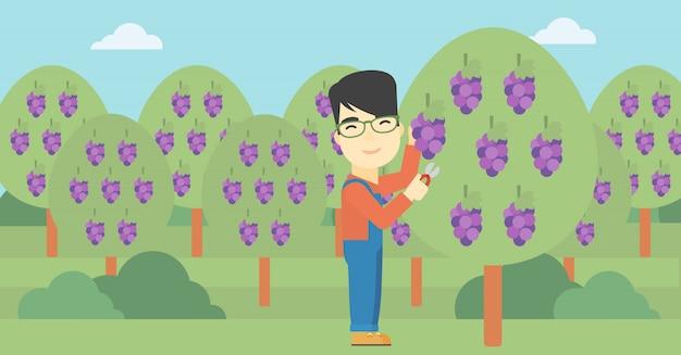 Agriculteur ramassant des raisins Vecteur Premium