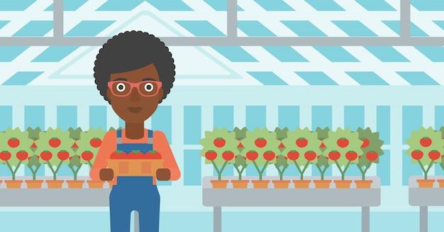 Agriculteur ramassant des tomates Vecteur Premium