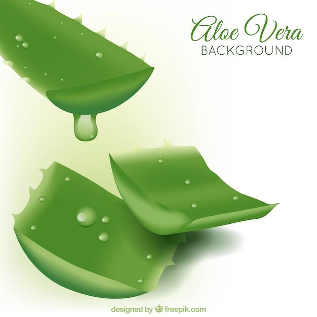 Aloe vera background de plante Vecteur gratuit