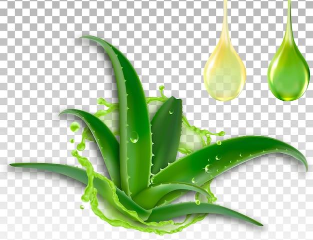 Aloe vera réaliste, splash et une goutte de jus Vecteur Premium