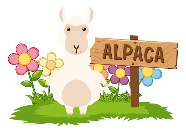Alpaga mignon dans le jardin Vecteur gratuit