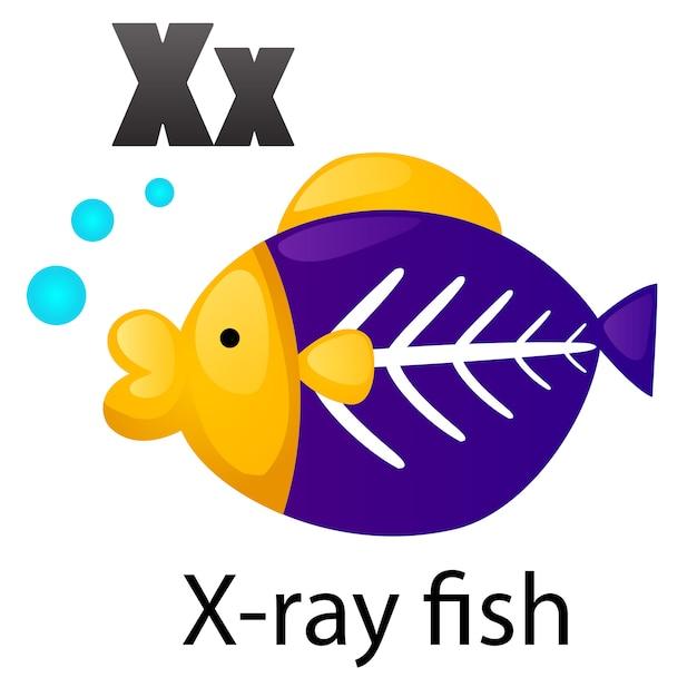 Alphabet lettre poisson rayons xx Vecteur Premium