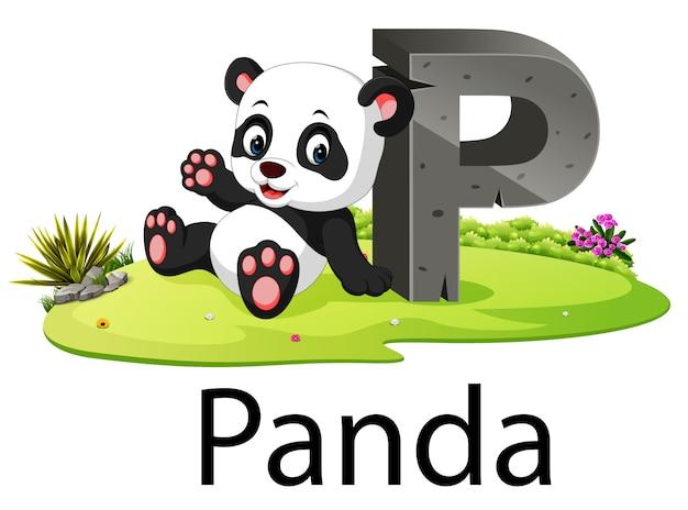 Alphabet zoo animal p pour panda avec l'animal mignon Vecteur Premium
