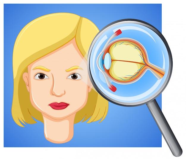 Une anatomie féminine du globe oculaire Vecteur gratuit