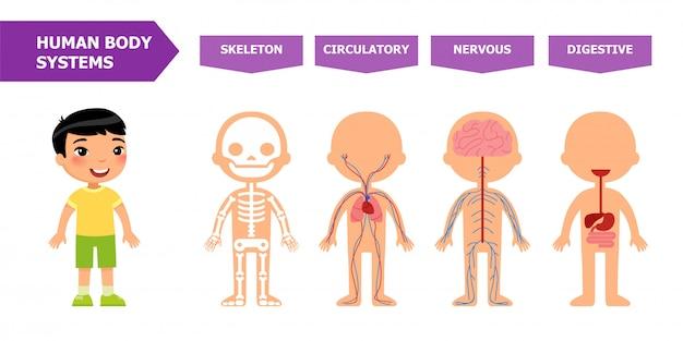 Anatomie pour les enfants. Vecteur Premium