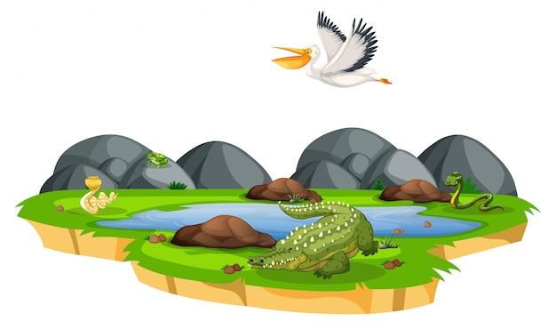 Animal sauvage dans la nature Vecteur gratuit