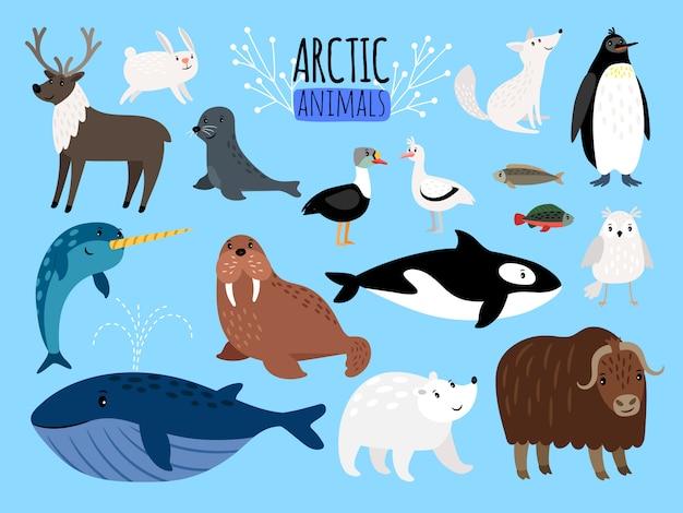 Animaux arctiques Vecteur Premium