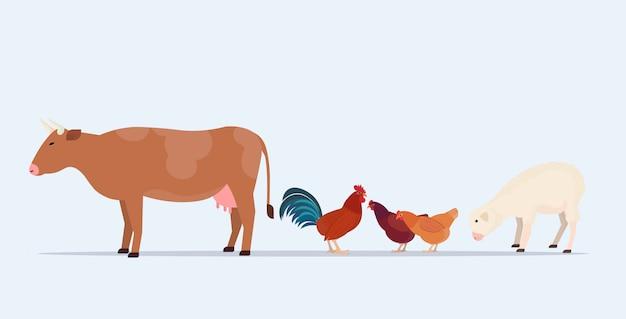 Animaux De La Ferme Pâturage Vache Mouton Poulet Différents Animaux Domestiques D'élevage Concept Agricole Fond Blanc Horizontal Vecteur Premium