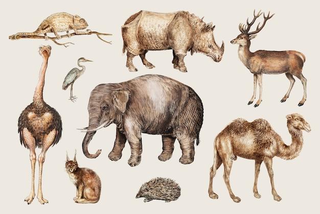 Animaux de safari Vecteur gratuit