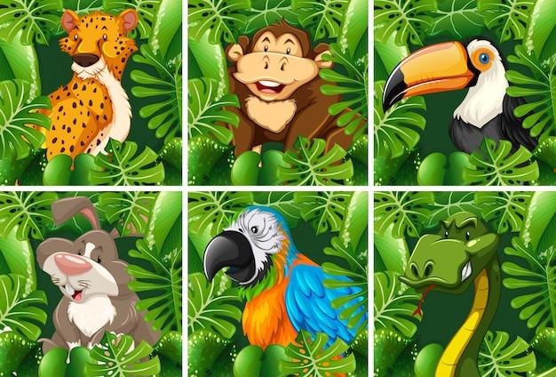 Animaux sauvages dans la forêt Vecteur gratuit