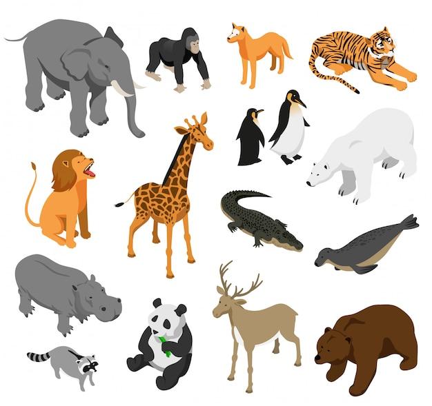 Animaux De Zoo Herbivores Et Prédateurs Ensemble D'icônes Isométriques Sur Blanc Isolé Vecteur gratuit