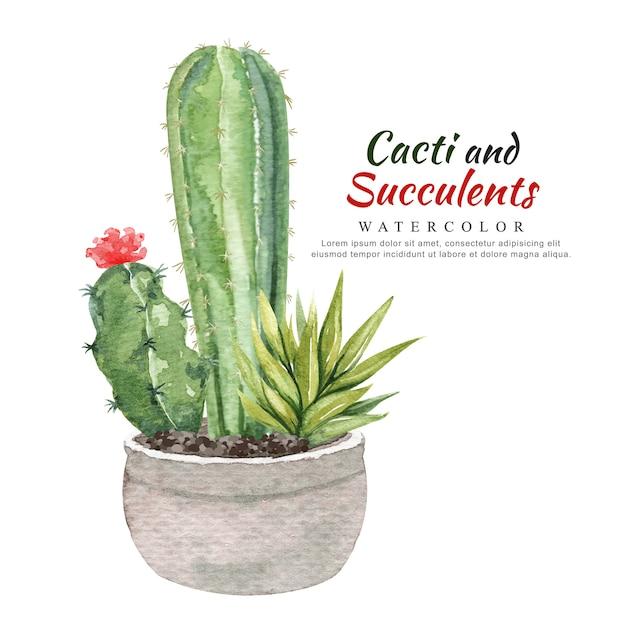 Aquarelle de cactus et de plantes succulentes en pot de fleurs. Vecteur Premium