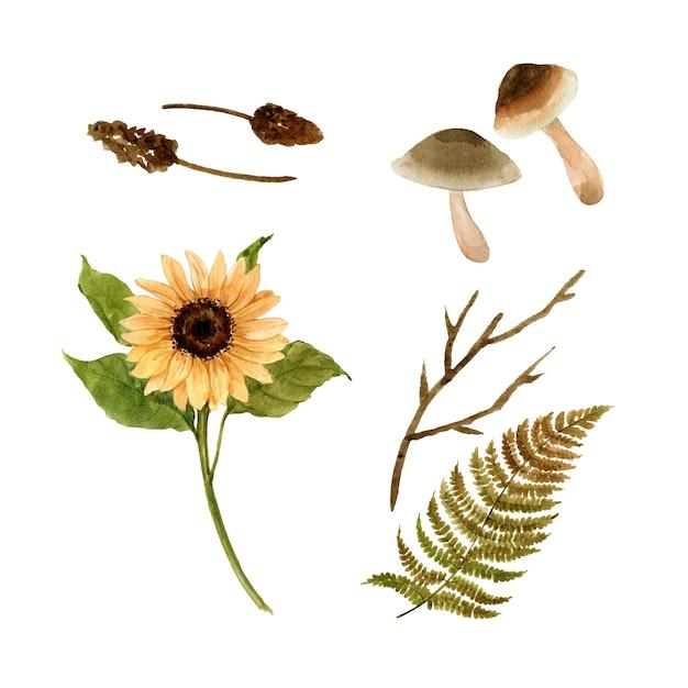 Aquarelle élément automne Vecteur gratuit