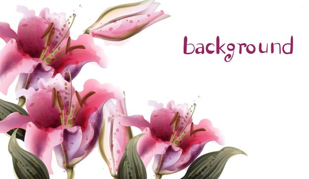 Aquarelle de fleurs de lis rose Vecteur Premium