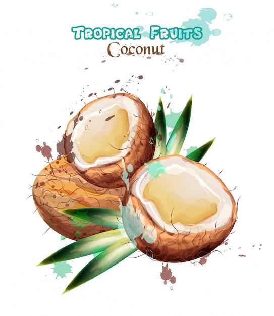 Aquarelle De Fruits De Noix De Coco Vecteur Premium