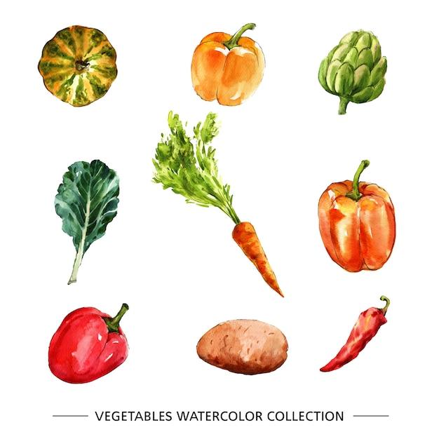 Aquarelle isolée de collection de légumes Vecteur gratuit