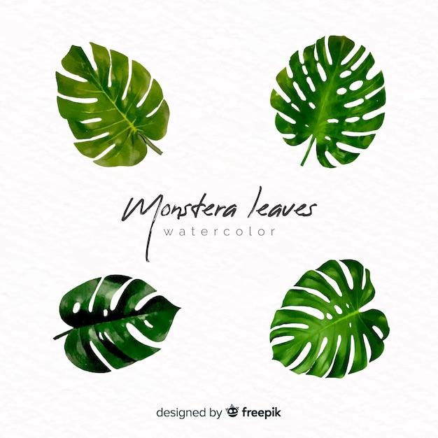 Aquarelle monstera feuilles Vecteur gratuit