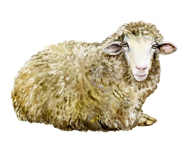À l'aquarelle mouton Vecteur Premium