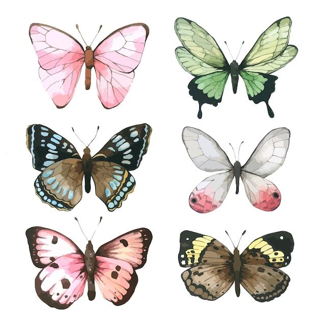 Aquarelle de papillon, ensemble de dessinés à la main papillon peint pour carte de voeux Vecteur Premium