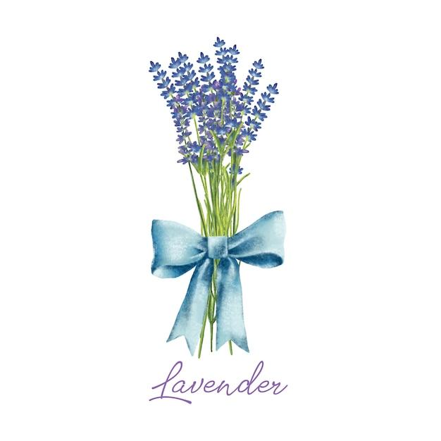 Aquarelle peinte à la main bouquet de fleurs de lavande avec archet Vecteur Premium