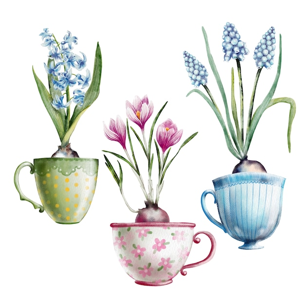 Aquarelle peinte à la main ensemble de primevères dans des tasses à thé Vecteur Premium