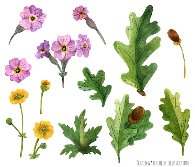 Aquarelle de plantes d'ecosse Vecteur Premium