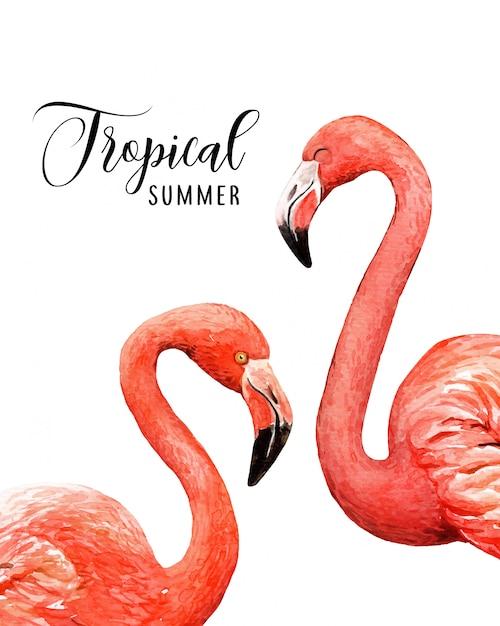 Aquarelle portrait oiseaux tropicaux flamingo. Vecteur Premium