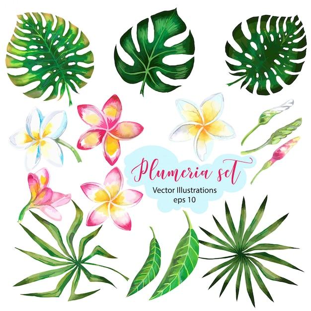 Aquarelle pour bannière de conception ou flyer avec des feuilles de palmier exotiques, fleurs de plumeria. Vecteur Premium