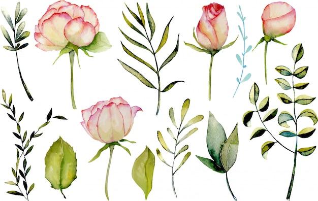 Aquarelle roses, feuilles vertes et ensemble de branches Vecteur Premium