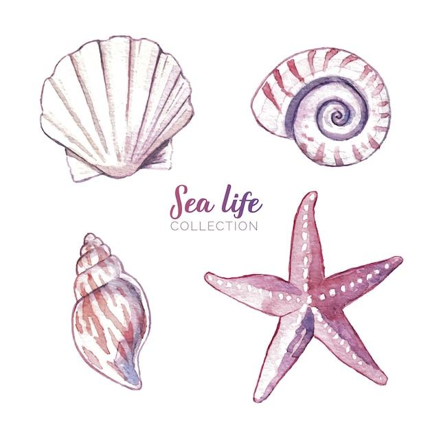 Aquarelle vie de la mer Vecteur gratuit